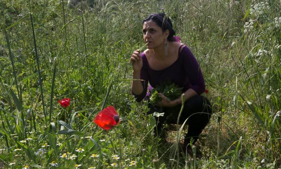 Palestinians Create Seed Bank to Save Their Farming Heritage in the Holy Land's Hills